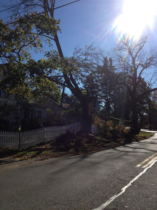 Milton Rd x Hill St. The part of the tree that fell clipped the front end of car 2421
